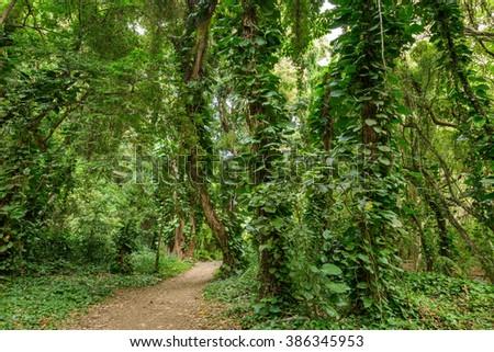 Path in Rain-Forest - A hiking trail in a dense tropical rain-forest. - stock photo