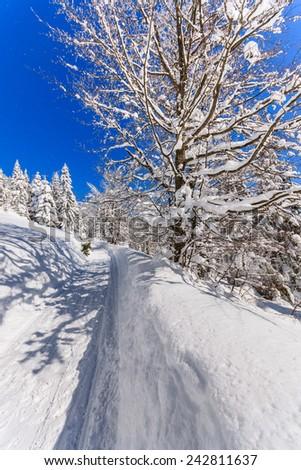 Path in snow in Gorce Mountains, Poland - stock photo