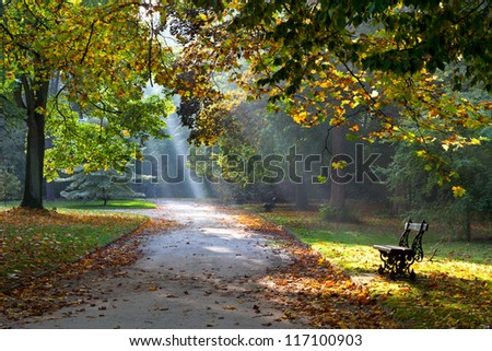 Path in the autumn park. Sunlight. Walking. Landscape. - stock photo