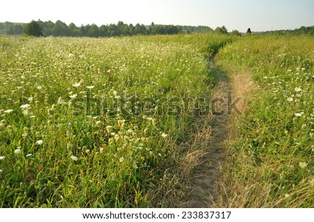 path in the grass field - stock photo