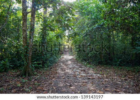 Path in the jungle of Bastimentos island ,Caribbean, Panama, Central America - stock photo