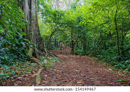 Path in the jungle of Panama, San Cristobal island, Bocas del Toro - stock photo