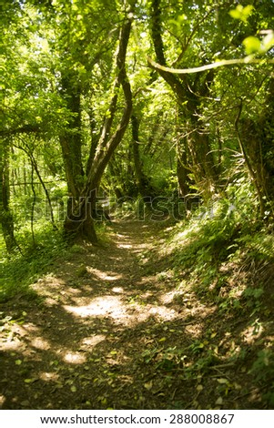 Path in the woods during the summer season - stock photo