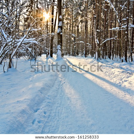 Path in winter forest. Beautiful winter forest. Winter landscape.  - stock photo