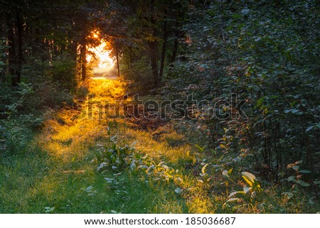 path in wood in golden morning light - stock photo