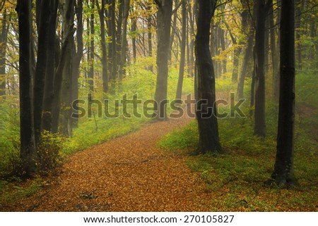 Path into foggy forest - stock photo