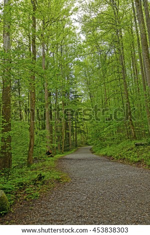 Path into the Green of Spring in the Smoky Mountains of Tennessee - stock photo