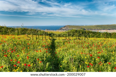 Path leading through a wildflower meadow on cliffs above Crantock Beach at West Pentire near Newquay in Cornwall - stock photo