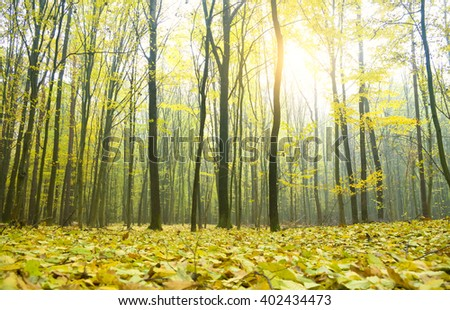 Path leading through the autumn forest.  