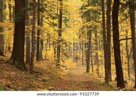 Path leads through picturesque autumnal forest. - stock photo