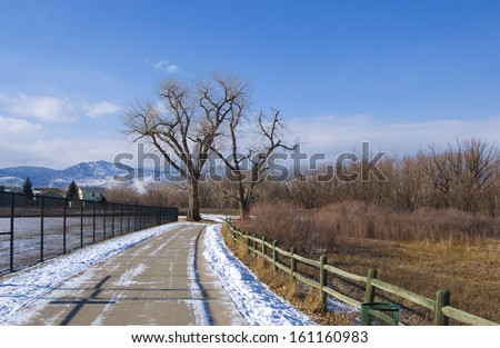 Path leads through two distant majestic bare cottonwoods in the distance on a snowy day - stock photo