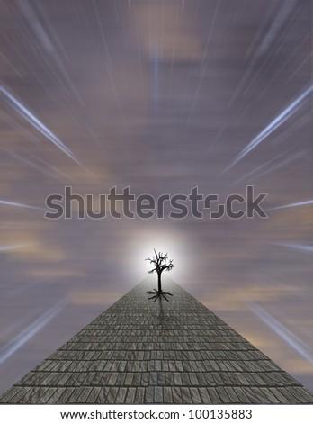 Path leads toward tree - stock photo
