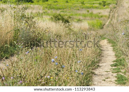 path on a meadow, summertime - stock photo