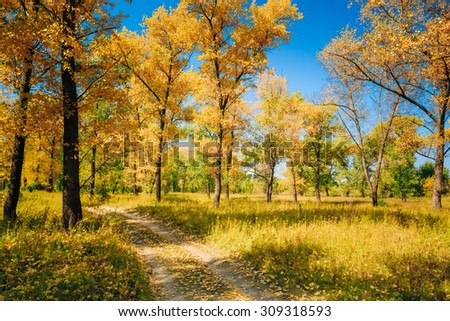 Path Road Way Pathway On Sunny Day In Autumn Sunny Forest Trees. Nature Wood Sunlight Background - stock photo
