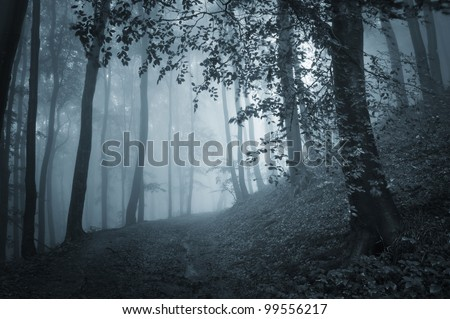 path through a dark forest with blue light - stock photo