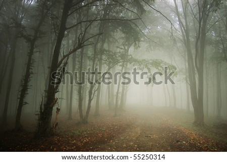 path through a forest with fog - stock photo