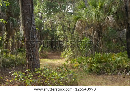 Path through a lovely palm and pine forest in western Florida - stock photo