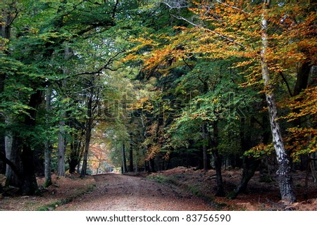 Path Through Autumn Trees A path through Autumn Trees, showing different colored leaves. Taken in the New Forest, England. - stock photo