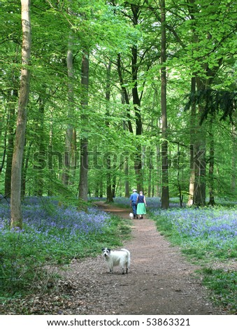 path through bluebell wood with couple and dog - stock photo