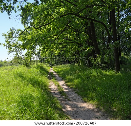 Path through green wild glade in the shadow of big branches on a sunny summertime day - stock photo