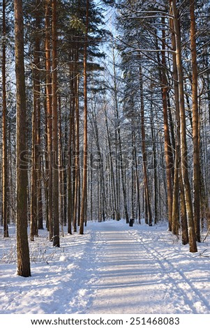 Path through pine trees in winter park - stock photo