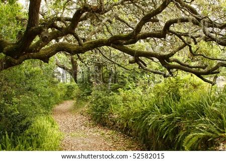 Path Through Springtime Garden - stock photo