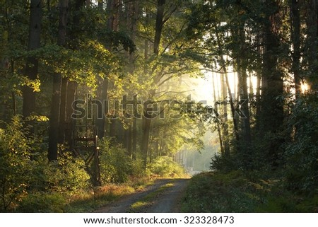 Path through the autumnal forest at dawn. - stock photo