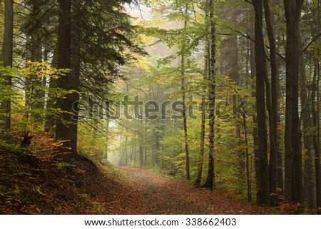 Path through the autumnal forest in foggy weather. - stock photo