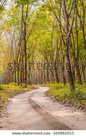 path through the beech trees in a forest in autumn colors with fallen leaves on the ground and on a foggy fall sunday morning. - stock photo