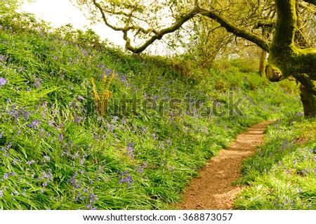 Path through the bluebells in Dorset, UK - stock photo