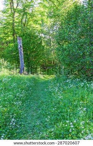 Path through the flowering meadow against forest - stock photo
