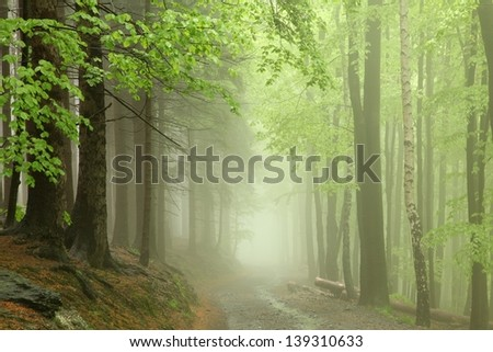Path through the forest in the early spring during rainfall. - stock photo
