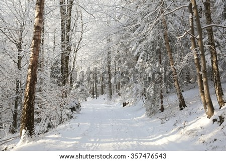 Path through the forest on a sunny winter morning. Europe, Poland. - stock photo