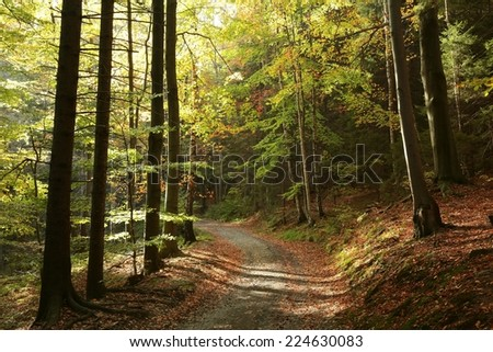 Path through the picturesque autumn forest. - stock photo
