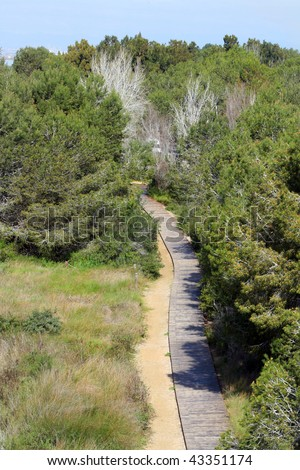 Path through the pines,El Palmar,nature reserve,Valencia province,Spain - stock photo