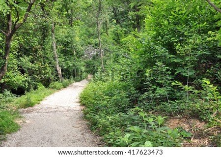 Path through the woods. - stock photo