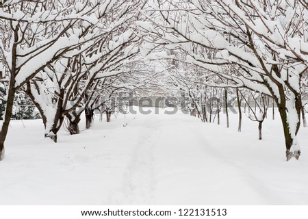 Path through woodland after fresh snowfall. Space for copy on path - stock photo