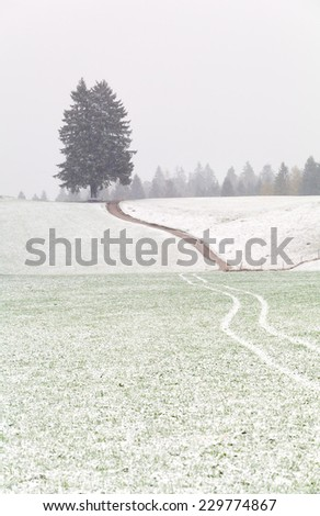 path to single tree and snowstorm in Alps - stock photo