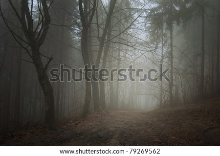 path towards light in a dark forest - stock photo