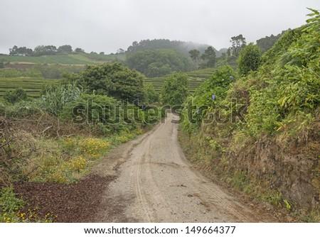 Path trough a tea plantation on the Azores - stock photo