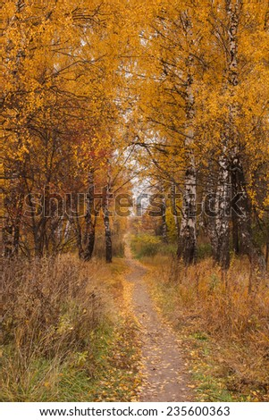 Path under a trees in the autumn forest - stock photo