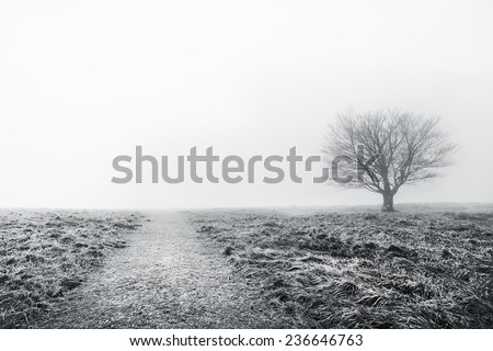 path with a solitary tree. Black and white - stock photo