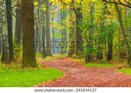 path with fallen leaves in autumn park - stock photo