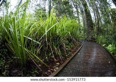 Pathway in a rain forest in New Zealand - stock photo