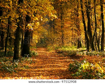 Pathway in autumn forest. Beautiful nature background. - stock photo