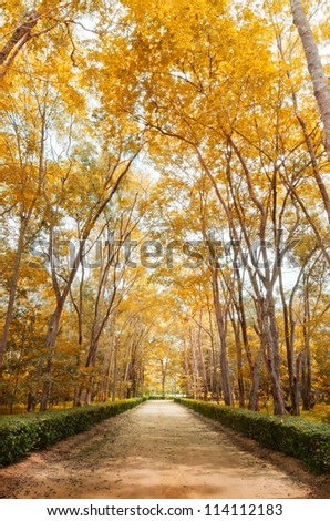Pathway in Beautiful autumn park Vertical - stock photo