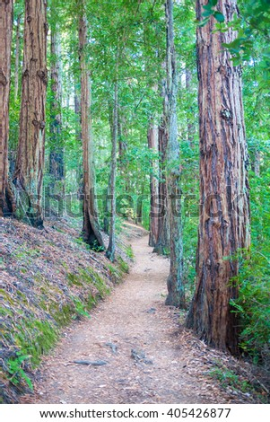 Pathway in forest as light breaks through trees - stock photo