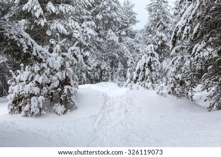 Pathway in snow at wintry coniferous forest, nobody - stock photo