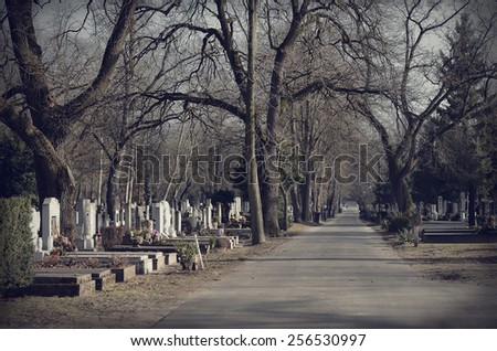 Pathway in the cemetery, dark toned - stock photo
