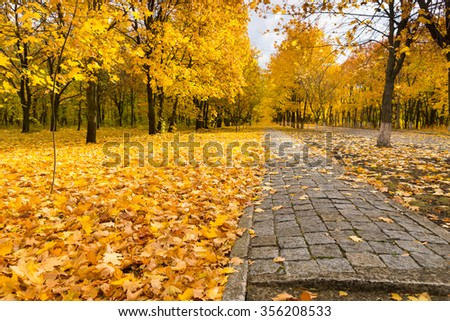 Pathway through colorful autumn woodland with bright yellow foliage on the trees and carpeting the ground in a dense layer, low angle view - stock photo